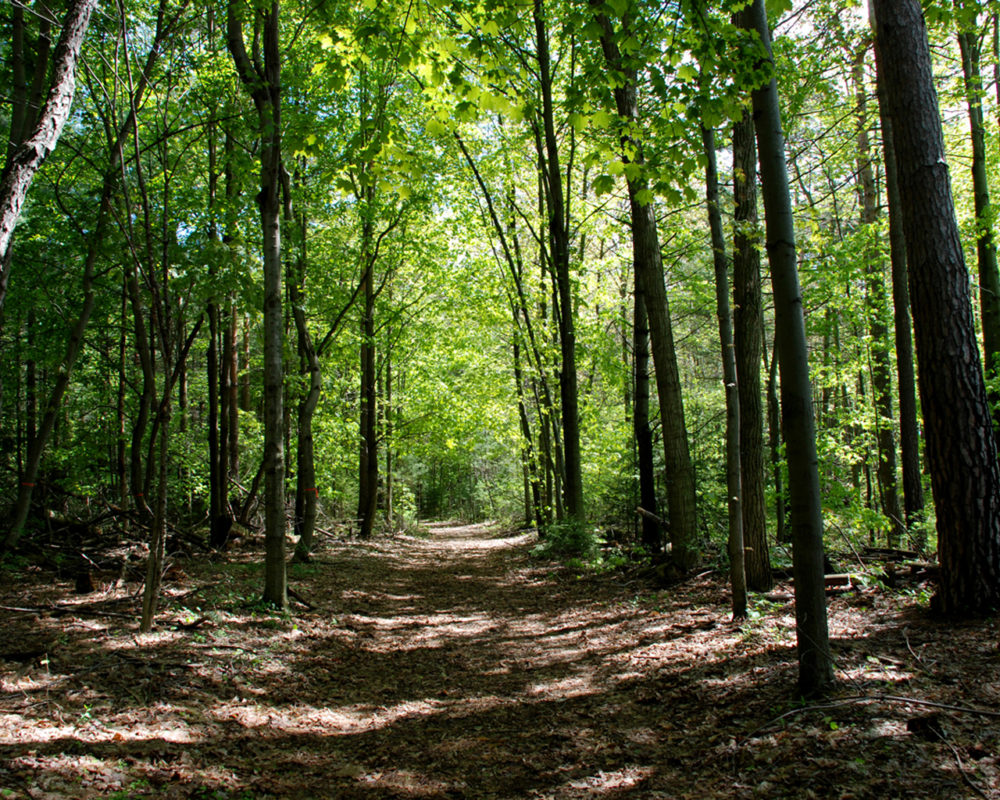 Backus Woods – Amazing Places